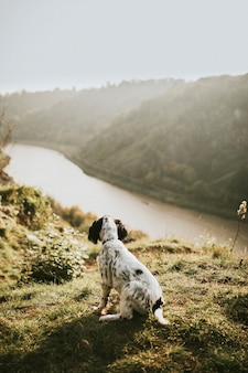 Hund bei einer wanderung in der natur