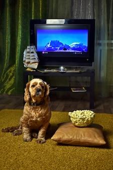Hund cocker spaniel vor dem fernseher