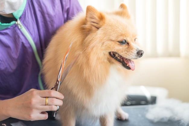 Hund, der am salon gepflegt wird