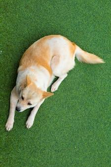 Hund, der auf dem kunstrasen des familienheims liegt.