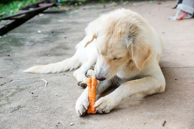 Hund, der auf einem fußboden liegt und einen knochen zerfrisst