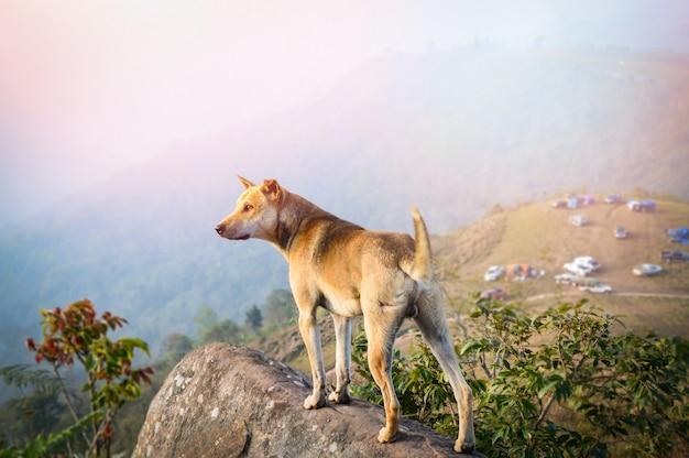 Hund, der auf felsen steht / landschaft des hundestandes auf hügelansicht des kampierens auf dem gebirgshintergrund