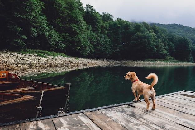 Hund, der auf hölzernem pier steht