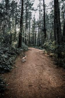 Hund, der auf schotterweg im dichten wald steht
