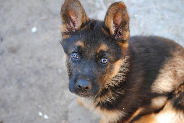 Hund - der beste freund des menschen