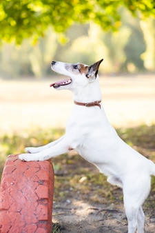 Hund, der draußen im park spielt