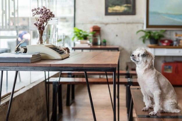 Hund, der im café etwas betrachtet sitzt