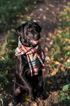 Hund, der im park trägt bunten schal sitzt