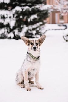 Hund, der im winterwald sitzt