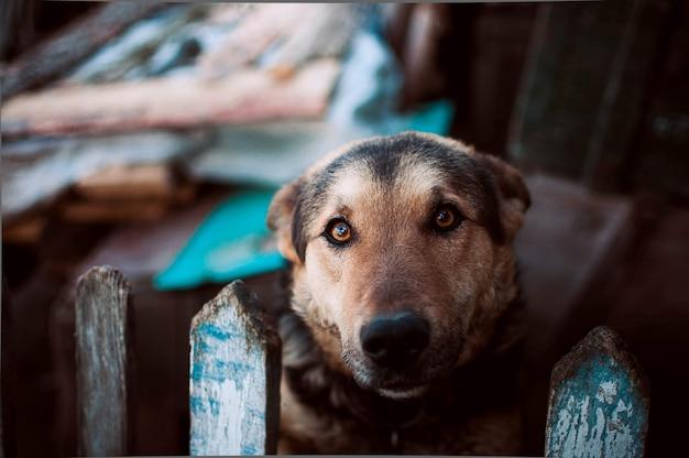 Hund, der in camera nahe dem zaun schaut