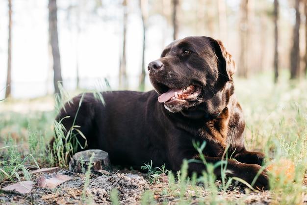 Hund, der in der natur sich entspannt