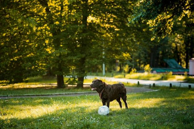 Hund, der mit ball im park spielt