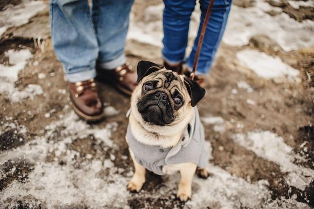 Hund, der mit dem eigentümer im freien im winter verschneit wird. schönes paar im winterfeld auf einem spaziergang mit dem hund.