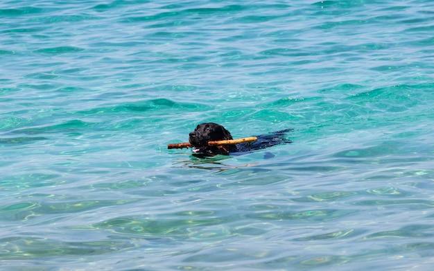 Hund, der mit stock im meer spielt