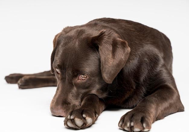 Hund, der mit weißem hintergrund aufwirft