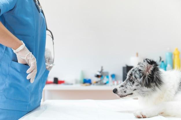 Hund, der weiblichen tierarzt mit ihren händen in der tasche betrachtet
