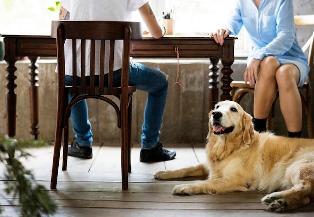 Hund des goldenen apportierhunds, der auf den bretterboden legt