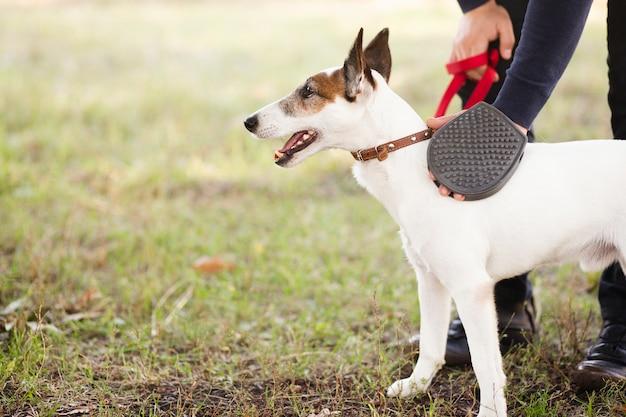 Hund gehalten vom inhaber im park
