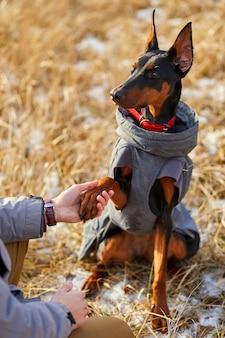 Hund gibt dem menschen seine pfote