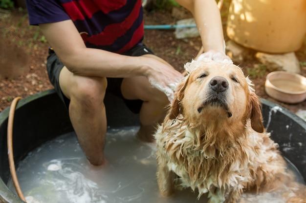 Hund, goldener apportierhund baden, der eine dusche nimmt und haar mit seife und wasser waschen