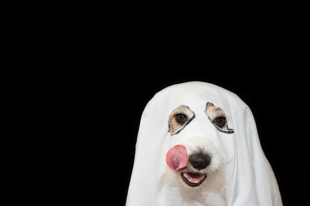 Hund-halloween-geist-kostüm-partei. getrennt gegen schwarzen hintergrund