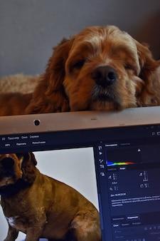 Hund hindert den besitzer an der arbeit