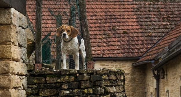 Hund hinter dem zaun