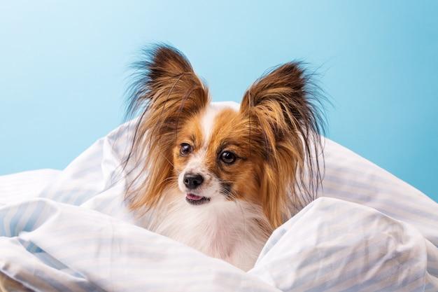 Hund im bett eingewickelt