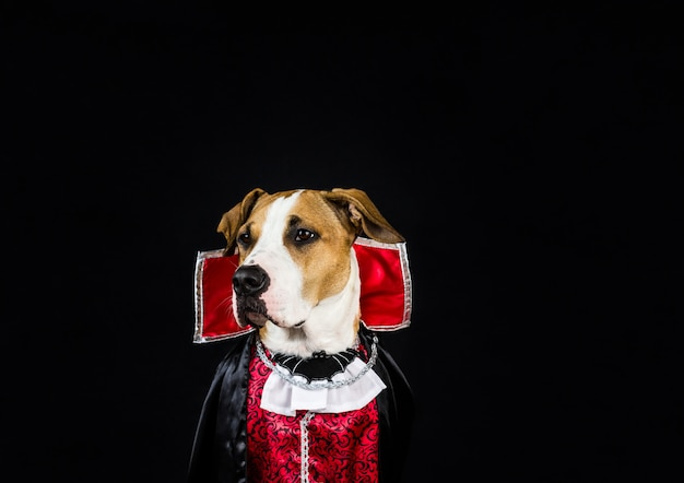 Hund im halloween-kostüm