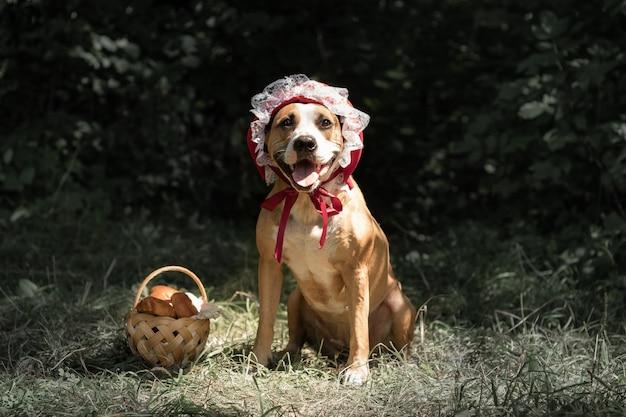 Hund im halloween-märchenkostüm der kleinen roten mütze. netter welpe wirft in der roten reitenden haubenkappe und im korb mit gebäck im grünen waldhintergrund auf