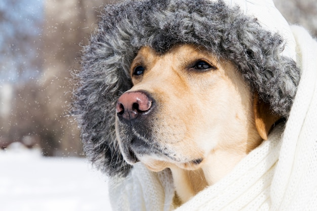 Hund im kalten schnee im winter in der kleidung