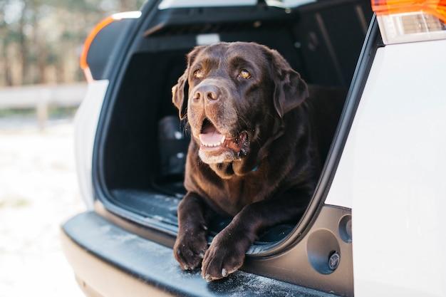 Hund im offenen kofferraum entspannen