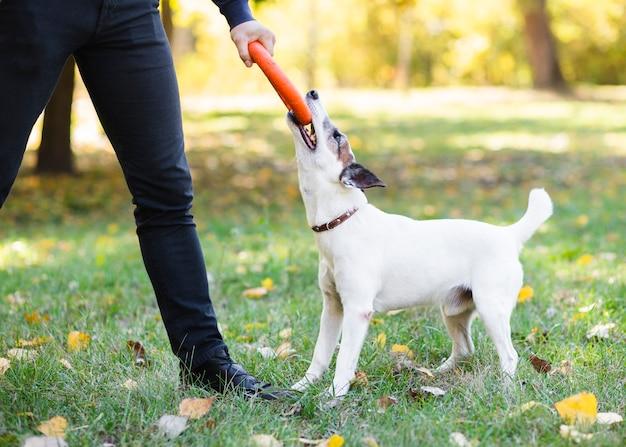 Hund im park, der mit inhaber spielt