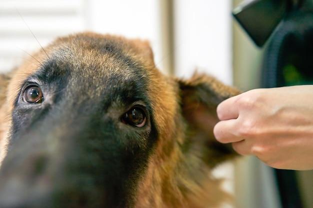 Hund im pflegeraum mit händetrockner