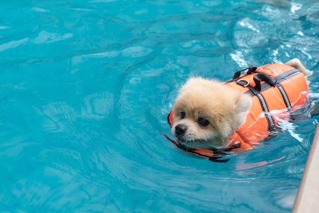 Hund im pool schwimmen