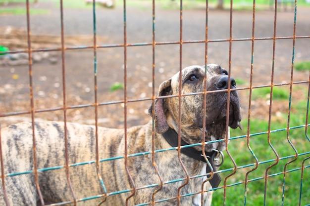 Hund im tierpark, der durch den zaun, annahme wartend schaut.