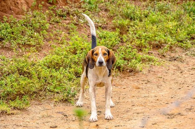 Hund im volksmund als mutts bekannt