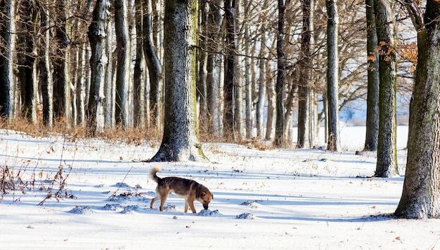 Hund im wald im winter bei sonnigem wetter