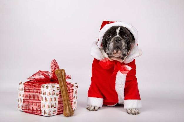 Hund im weihnachtsmann-kostüm und -hut mit einem geschenk und einem knochen zum zu beißen. weihnachtssymbol