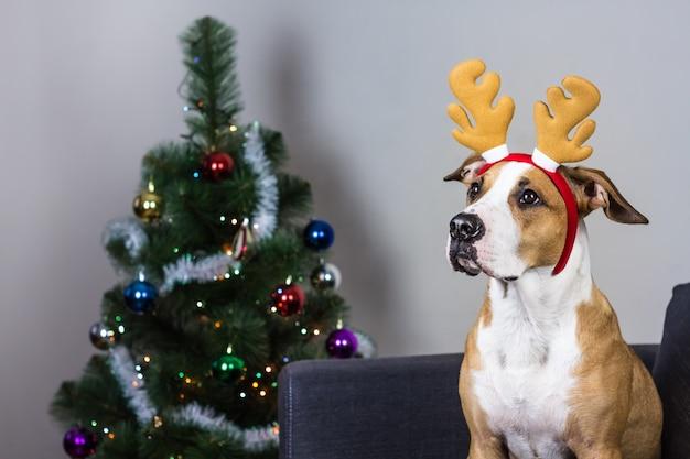 Hund im weihnachtsrentierstirnband und im pelzbaum