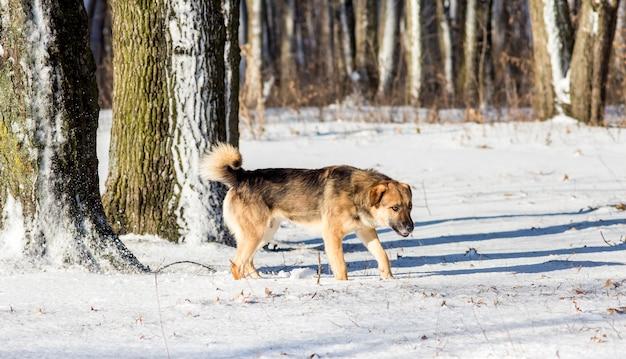 Hund im winterwald bei sonnigem wetter. winterlandschaft mit hund