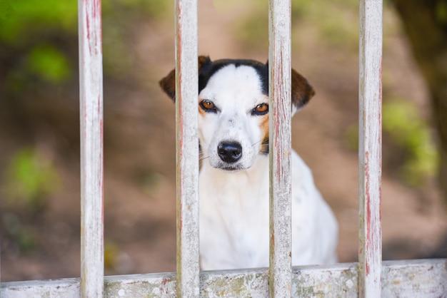 Hund im zaun - trauriges hundetierhaustier