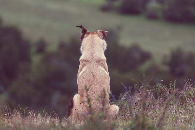 Hund in bergwiese