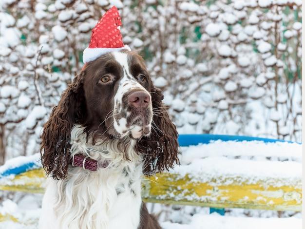 Hund in der roten kappe auf kopf sitzt auf bank im winterpark. weihnachtskonzept