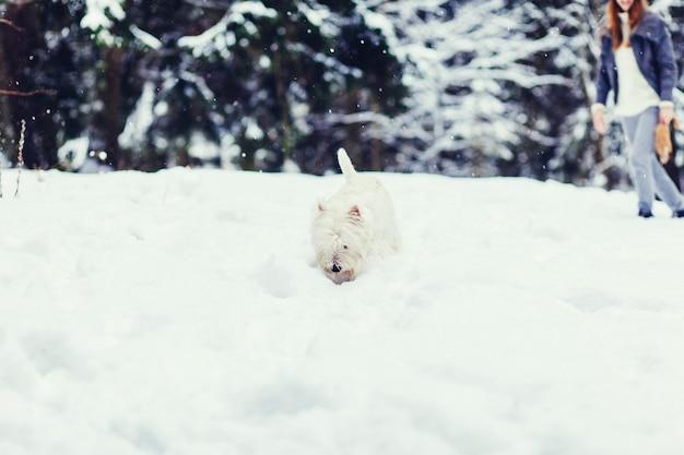 Hund in der winterlandschaft. porträt weißer terrier