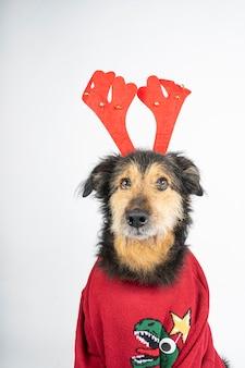 Hund in einem roten pullover, rentiergeweih und weihnachtsbrille auf weiß