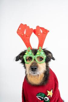 Hund in einem roten pullover, rentiergeweih und weihnachtsbrille
