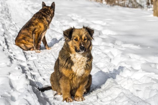 Hund in einem verschneiten wald