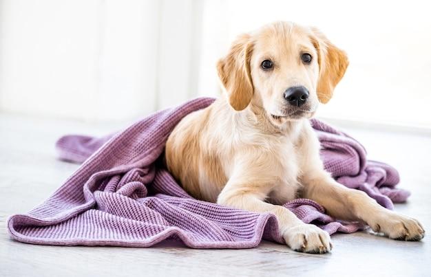 Hund in tagesdecke gewickelt