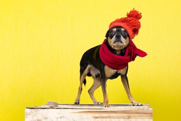 Hund in winterkleidung